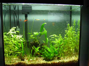 FAQs on Algae and Their Control In Aquarium Gardens 1