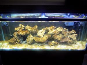 Dinoflagellates??? - Reef Central Online Community