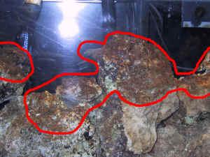 Diatomalgcontfaq3 for Red algae in fish tank