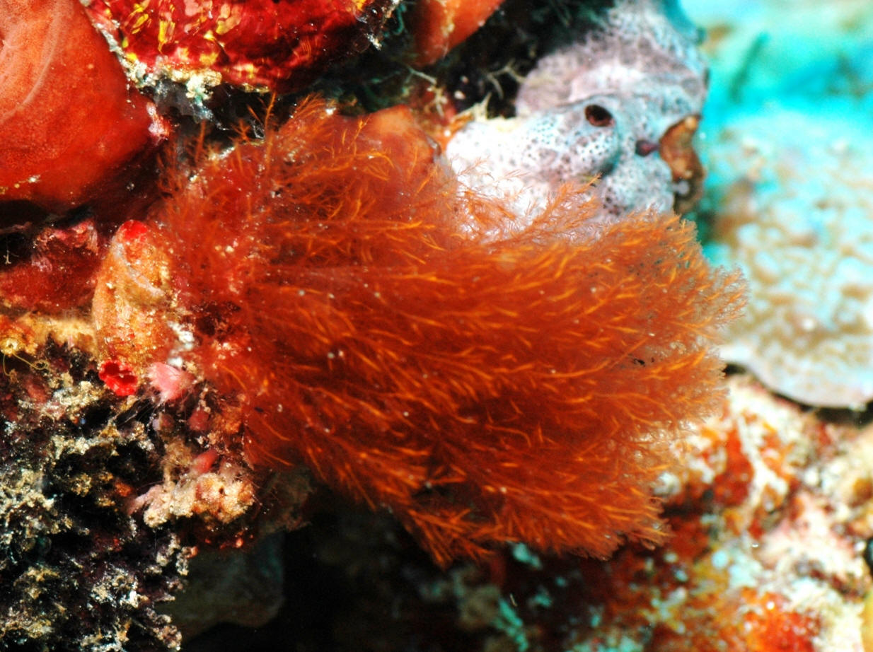 Marine biome thinglink for Red algae in fish tank