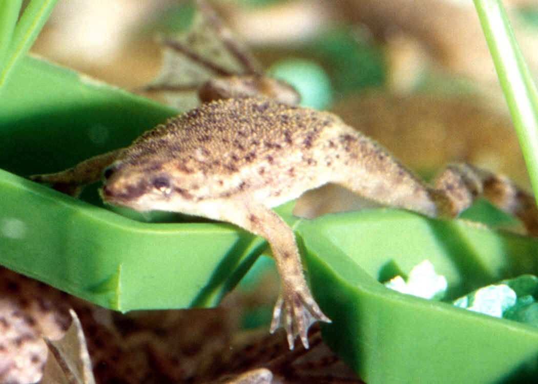 Amphibians: Frogs, Newts, Salamanders and Toads.