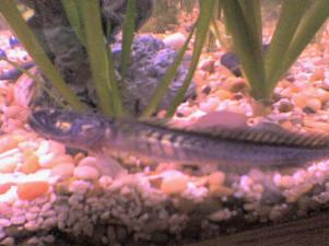 Pimafix Antifiunigal Fish Remedy 8 Oz Punctual Timing Hot Sale Aquarium Pharmaceuticals