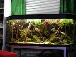 """Extra Large Barnacle Cluster 12-15/"""" for Aquarium Fish Tank Terrarium Ornament"""