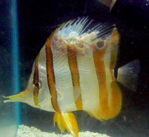common saltwater fish coral diseases and treatment On saltwater fish diseases