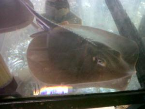 Videos of Aquarium Fish Tropical Fish and Goldfish in