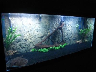 Home for Stingray fish tank