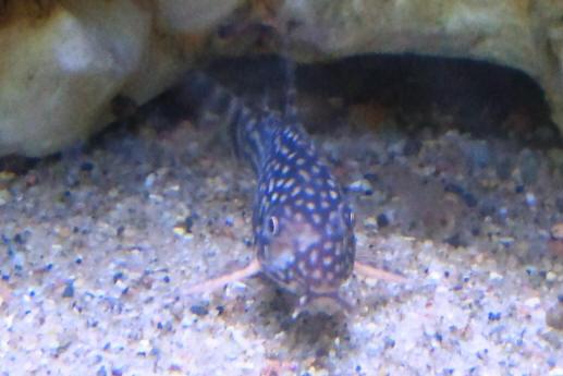 Uk Apprehensive Selection Airstone Bubble Strip Air Stone Fish Tank Aquarium Air Pump Wall Fish & Aquariums Pet Supplies