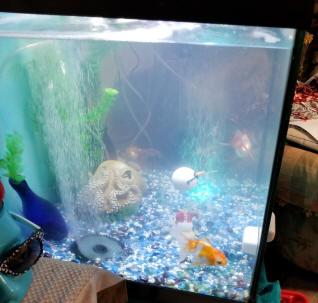 Alician Household Submersible Silence Water Pump for Aquarium Fountain Air Fish Pond Tank American Regulation