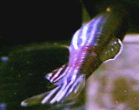 Faqs On Freshwater Aquarium Water Quality 3