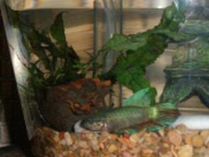 Fish & Aquariums Filters Selfless Tetra Whisper Bio-bag Cartridge