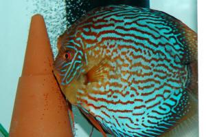 Aquatronica Aquarium Automation System Aquascape Cheap Sales 50% Other Fish & Aquarium Supplies Pet Supplies