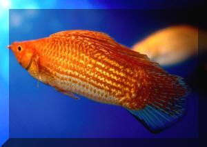 Medium Fish & Aquariums Purposeful Biorb Easy Plant Winter Flowers Pet Supplies