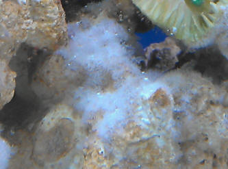 Marfungfaqs for Fungus in fish tank