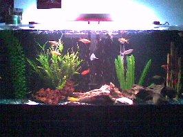 Frugal Fluval Aquaplus 2 Litres Reputation First Other Fish & Aquarium Supplies Fish & Aquariums