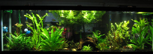Cloudy freshwater aquarium 1000 aquarium ideas for My fish tank water is cloudy
