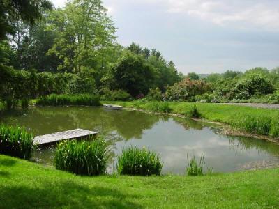 Faqs On Pond Maintenance