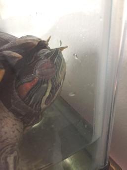 FAQs About Turtle Eye Disease/Health