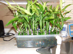 Freshwater,How Set Up Freshwater Aquarium,Freshwater Fish,Freshwater Equipment