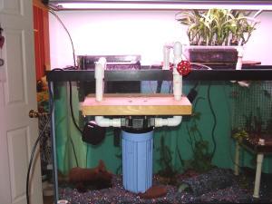 Freshwater,How Set Up Freshwater Aquarium,Freshwater Fish,Freshwater Equipment