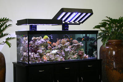 a pair of ecoxotic hoods in use over an established marine aquarium ecoxotic photo