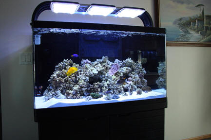 20 gallon aquarium stocking options