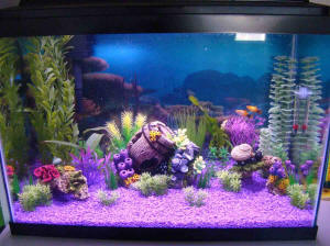 Gallon Fish Tank on Re Stocking A 20 Gallon Community Tank 10 3 11