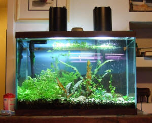 & FAQs on Lighting Fixtures Lamps for the Planted Tanks