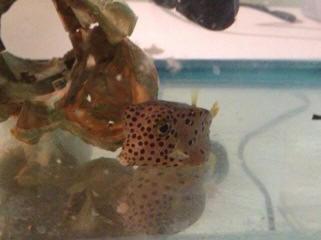 4 Oz Purposeful Aquarium Pharm Melafix Fish Remedy