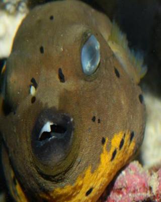 True puff trauma f for Fishing eye syndrome