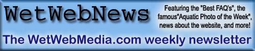 WWW.WETWEBMEDIA.COM