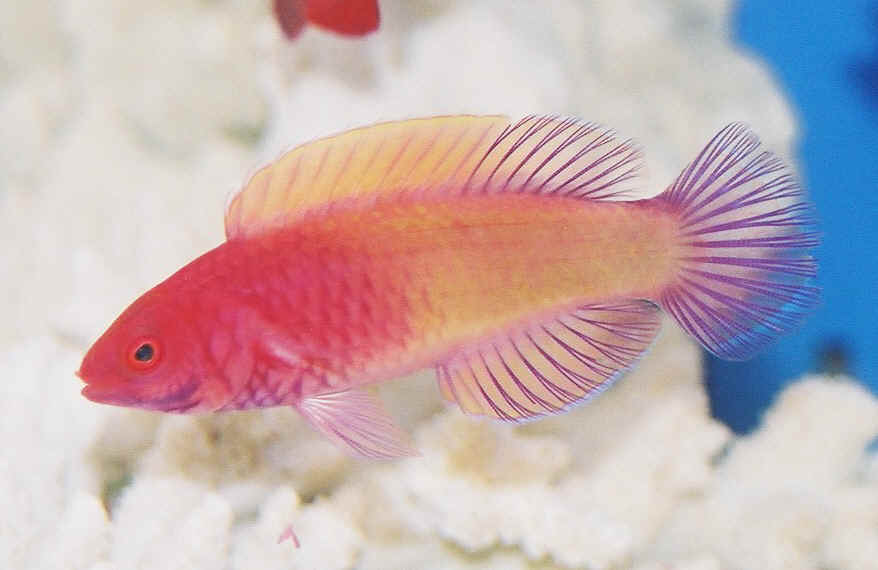 What Is The Common And Scientific Name Of This Fish