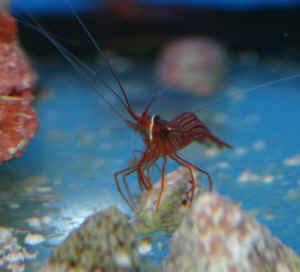 impressions of methods to eliminate pest anemones