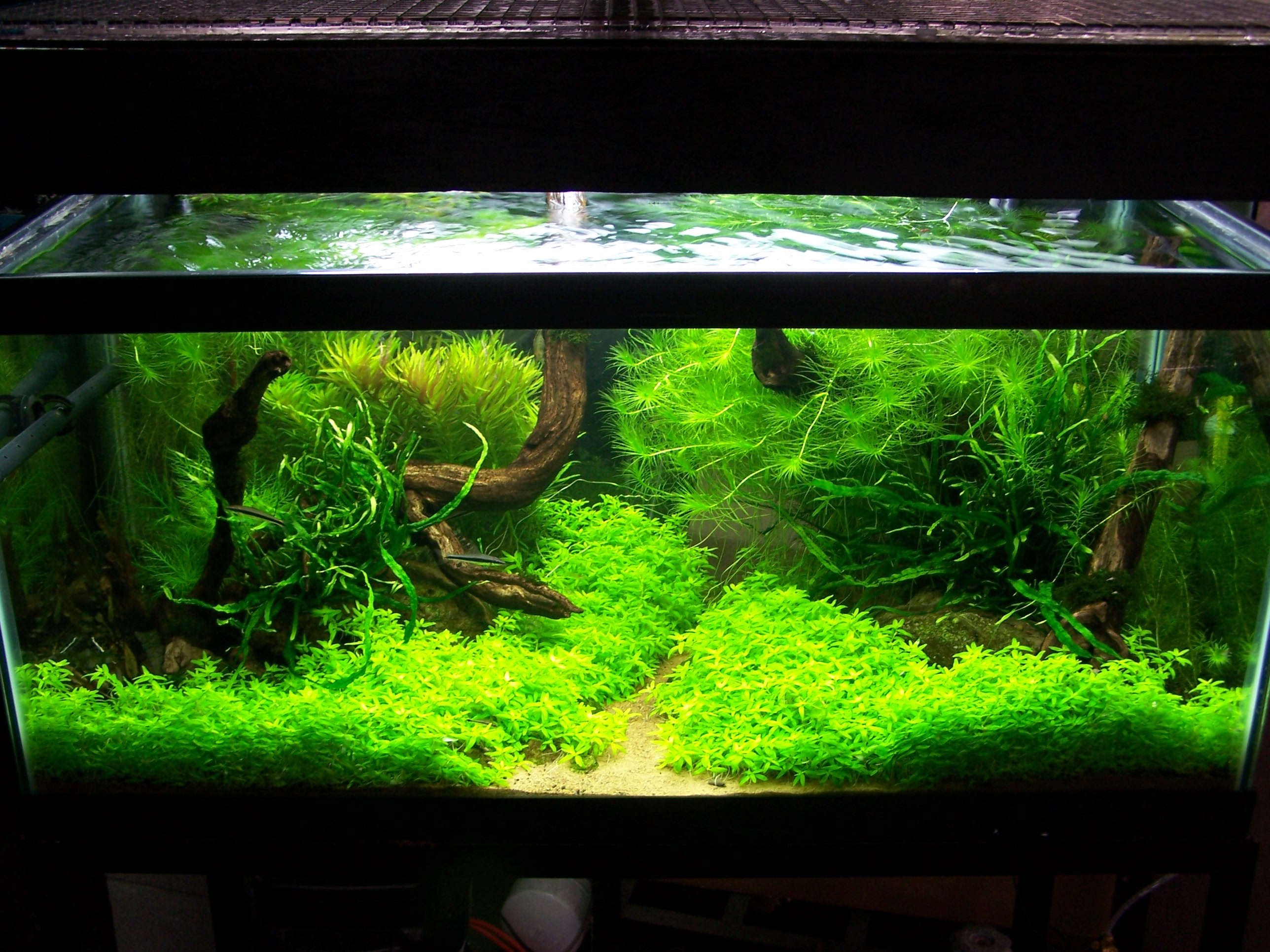 Adventures in aquascaping for Planted tank fish