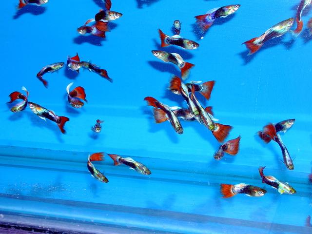 Stocking 5 10 And 20 Gallon Fw Aquariums