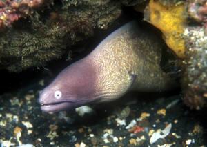 Despite ick factor  slime eel has sex appeal   Health   Sexual     SexTVx Elvers back on the menu following biggest harvest in    years   Telegraph